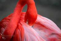 San Diego Zoo on Valentine's Day by Temecula Wedding Photographer