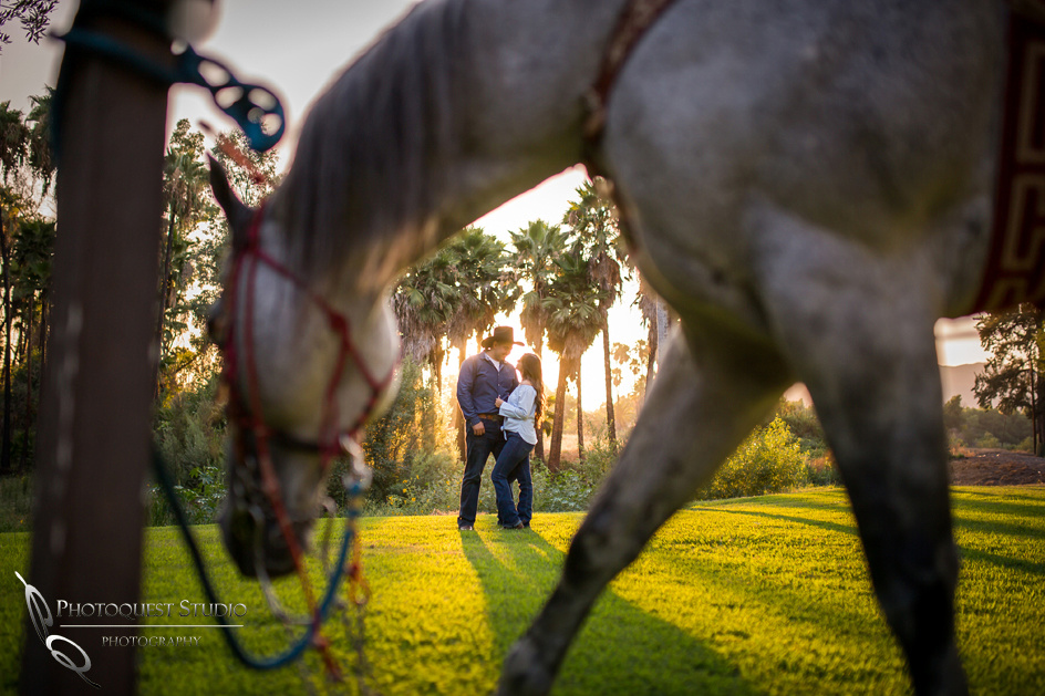 Wedding Photographer in Temecula, Engagement Photo with beautiful Couple and Horses in Riverside