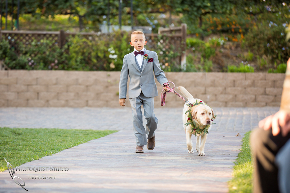 Cute Dog and Handsome Ring Boy