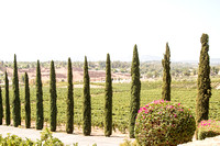 Surprise Proposal at Callaway, Temecula Winery by Wedding Photographer of Photoquest Studio - Tim & Megan