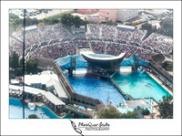 SeaWorld Trip by San Diego Wedding & Event Photographer