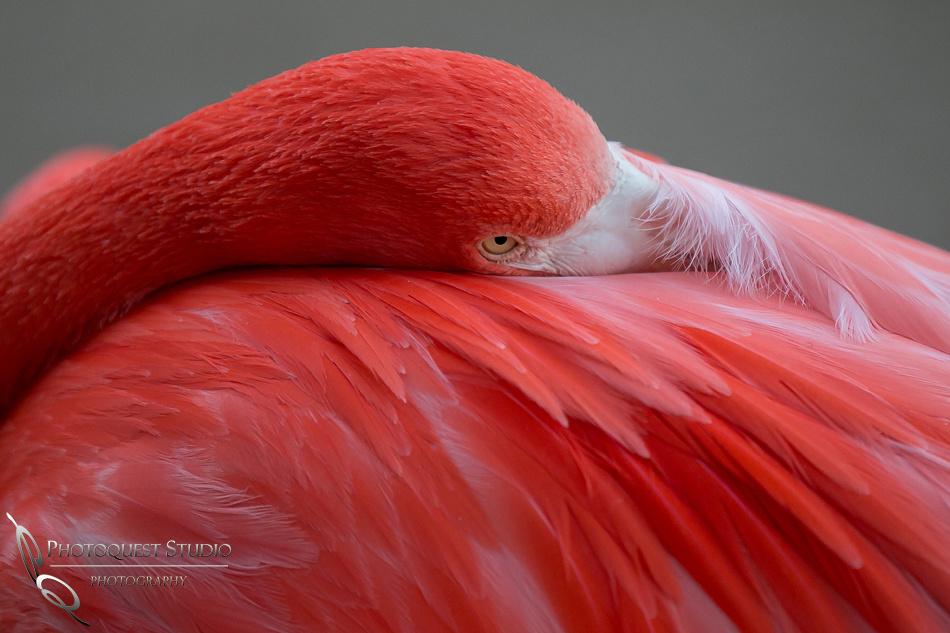 San Diego Zoo on Valentine's Day by Temecula Wedding Photographer