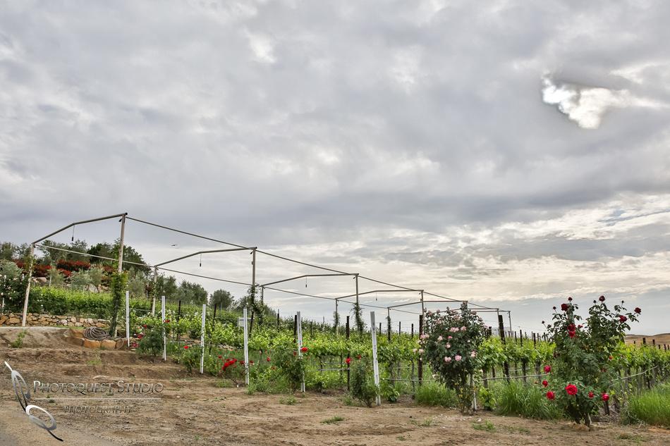 Doffo-Winery-Photo-by-Temecula-Wedding-Photographer-of-Photoquest-Studio-3