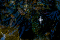 Wedding ring, diamond in the water by Fallbrook, Temecula Wedding Photographer